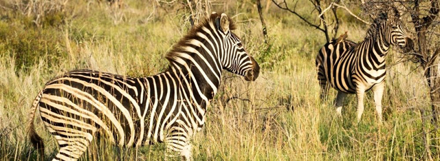 africa photo safari Madikwe8.jpg