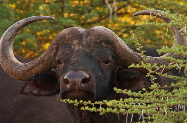 africa photo safari Madikwe6.jpg