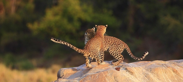 africa photo safari Madikwe5.jpg
