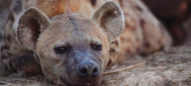 africa photo safari Madikwe4.jpg