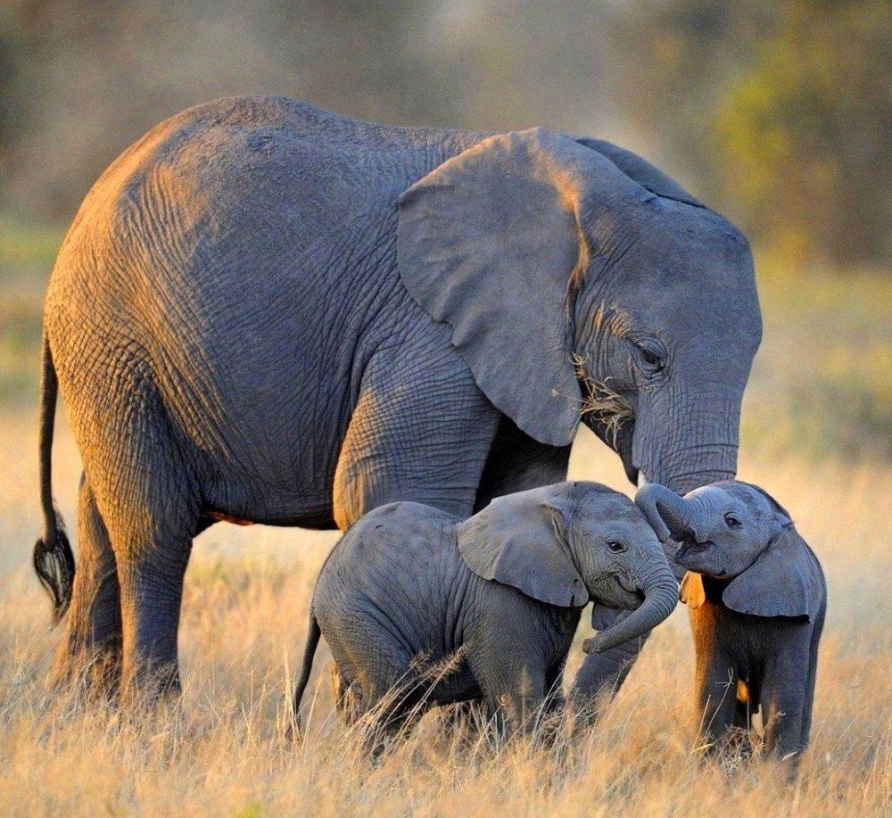 10 Day Best of botswana -