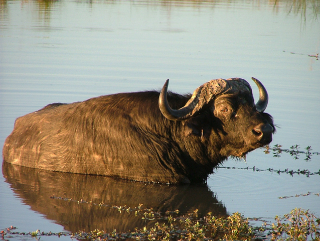 africa photo safari botswana camp25.jpg