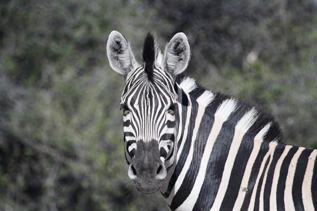 africa photo safari botswana camp23.jpg