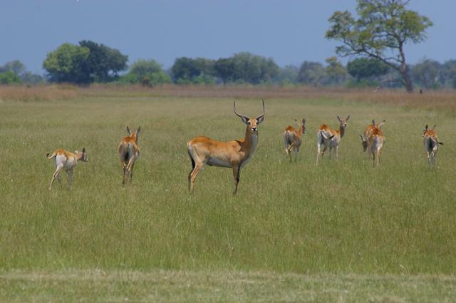 africa photo safari botswana camp15.jpg