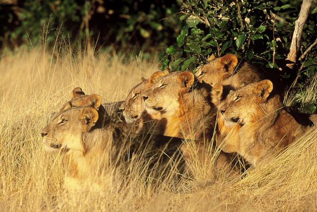 africa photo safari botswana camp13.jpg