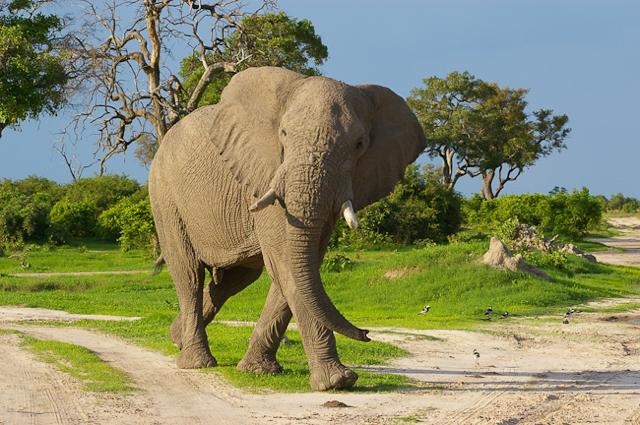 africa photo safari botswana camp8.jpg