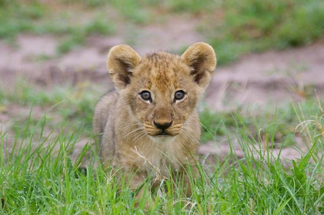 africa photo safari botswana camp5.jpg