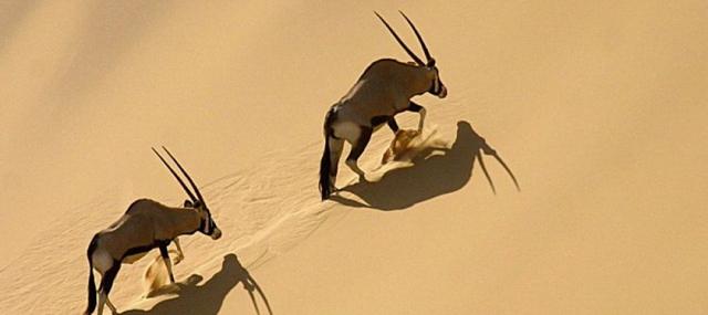 africa photo safari namibia-0310.jpg