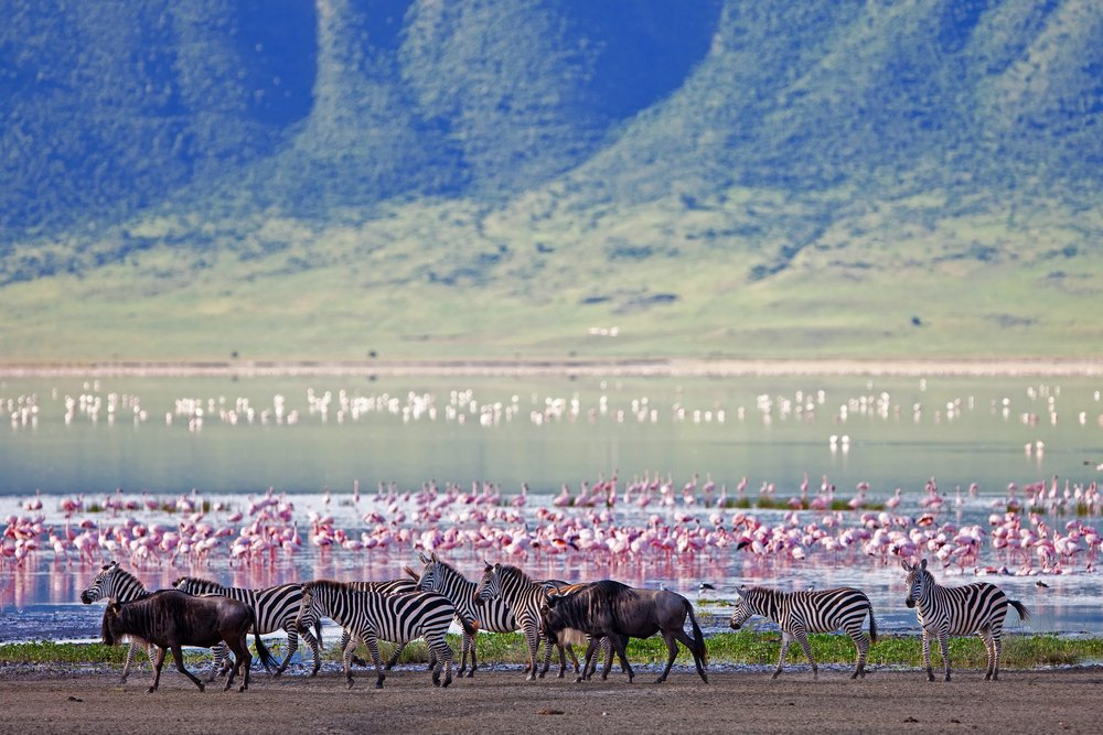Day 5&6:    NGOROGORO CRATER - A Ngorongoro Crater safari is jaw-droppingly beautiful. Follow ancient Maasai trails to the summit of the Olmoti crater and visit local communities to catch a glimpse into the traditional Maasai ...
