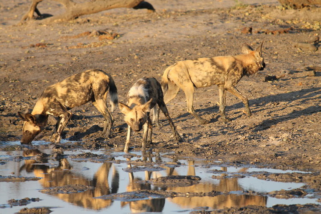 africa photo safari Zimbabwe-0113.jpg