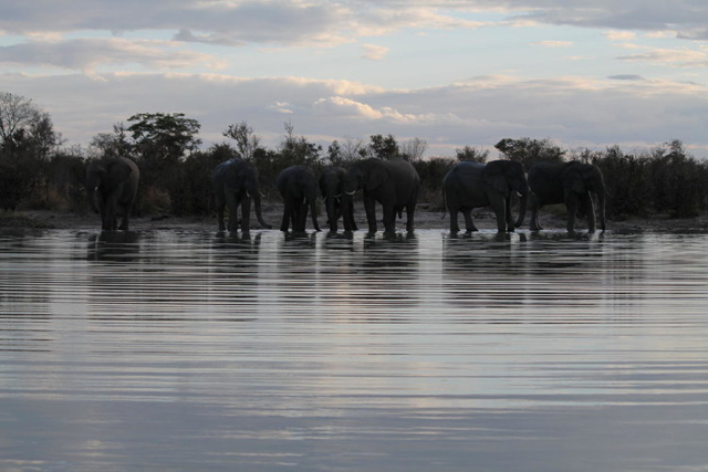 africa photo safari Zimbabwe-0111.jpg