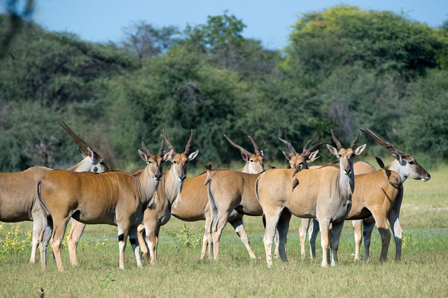 africa photo safari Zimbabwe-019.jpg