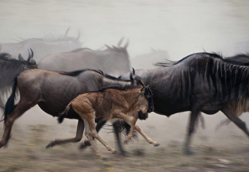 11 Days / Across 4 National Parks - Kilimanjaro,Tarangire,Ngorogoro, Serengeti!