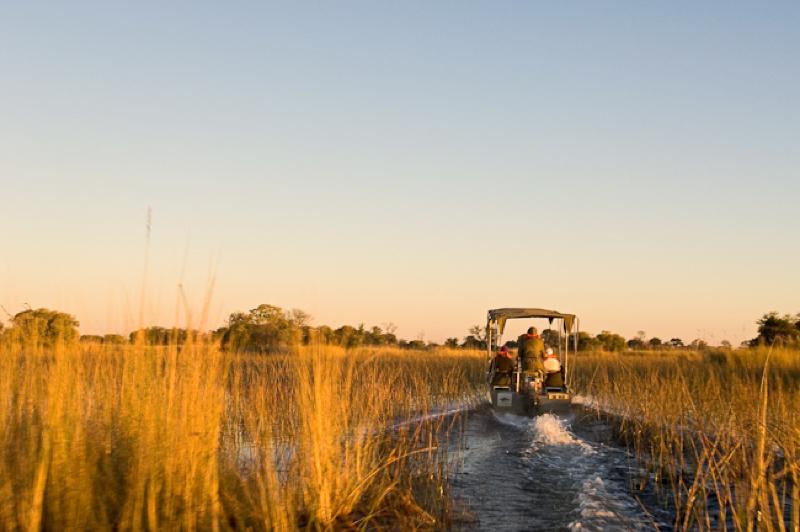 africa photo safari  botswana-1117.jpg