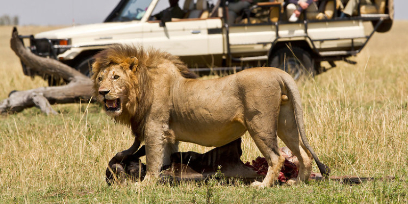 africa photo safari  tanzania-095.jpg