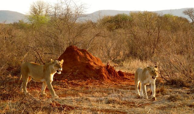 africa photo safari madikwe-01G10.jpg