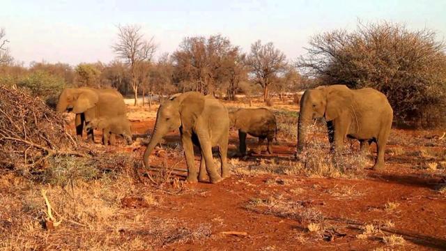 africa photo safari madikwe-01G5.jpg