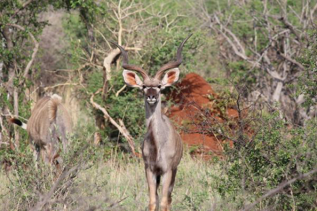 africa photo safari madikwe-01G4.jpg