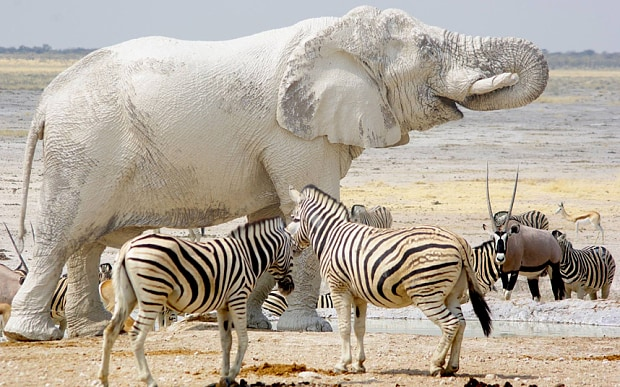 Day 1,2,3,4,5:        ETOSHA NATIONAL PARK - The Etosha National Park is like no other place on earth and the haunting beauty of the stark dry landscape will literally take your breath away. Home to four of the Big and a myriad of other creatures, both great and small