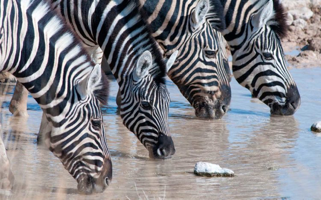 africa photo safarietosha-1015.jpg
