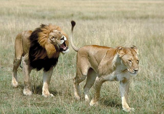 africa photo safarietosha-1013.jpg