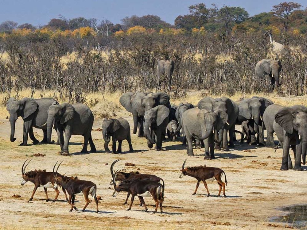 10 Day LUXURY Safari****    Zimbabwe & Botswana -