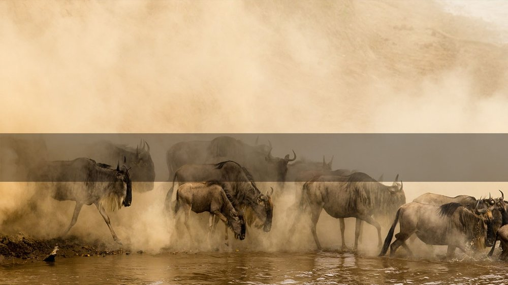 Africa Safaris         THE Great Migration      MORE INFO