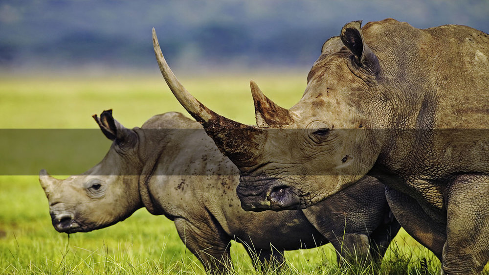 Safaris in Africa         SOUTH AFRICA's    Big 5       MORE INFO