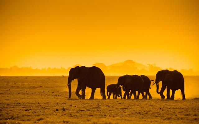 africa safari 18.jpeg