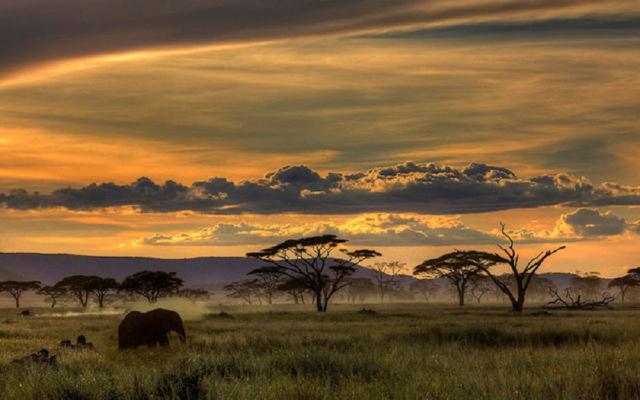 africa safari 17.jpg