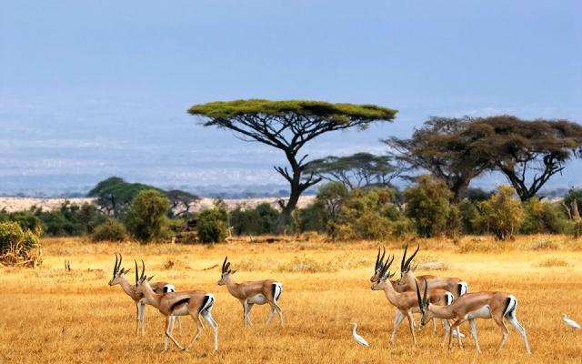 africa safari 16.jpg