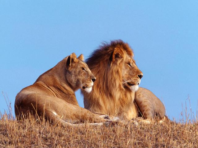 africa safari 14.jpg