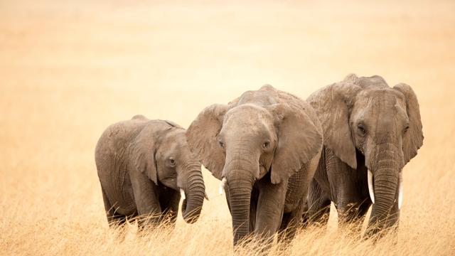 africa safari 12.jpg