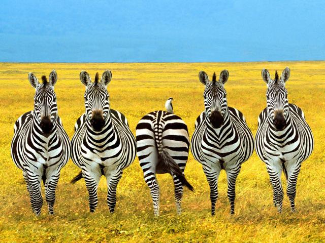 africa safari 13.jpg