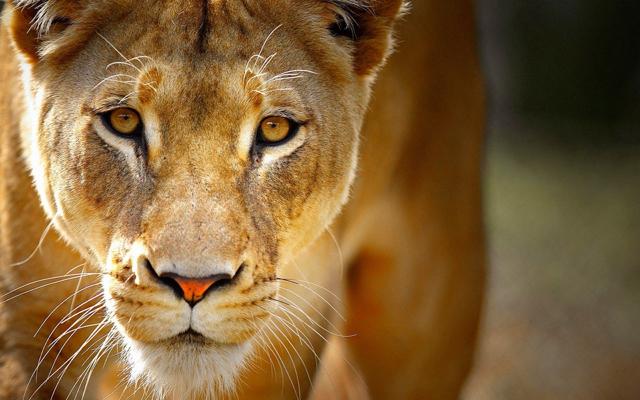 africa safari 10.jpg