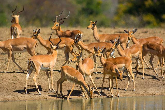 africa safari 11.jpg