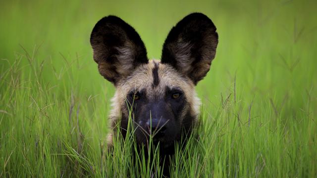 africa safari 9.jpg