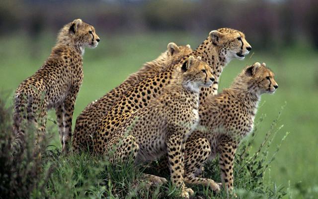 africa safari 8.jpg