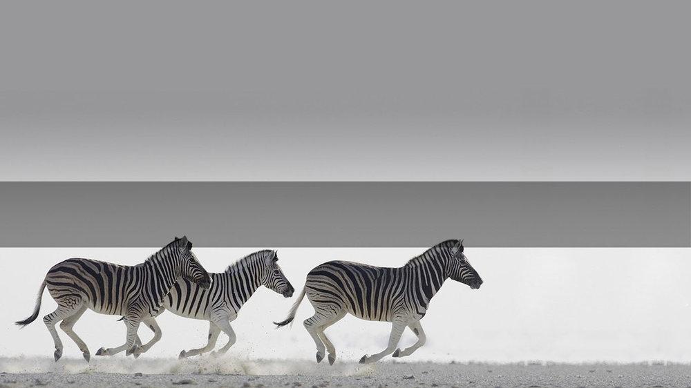 Safari in Africa         WELCOME