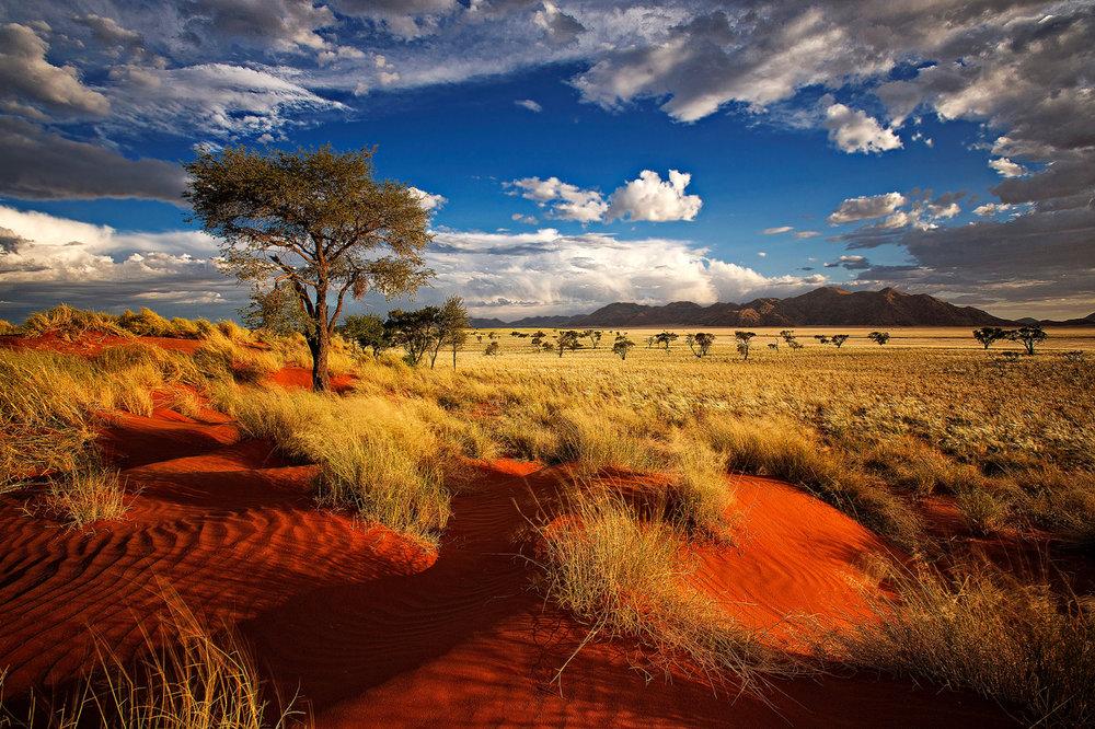 africa safari 101.jpg