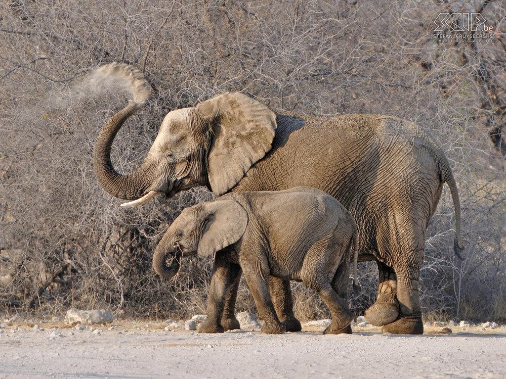 0693 - Namibie - Etosha - Goas - Olifant.jpg