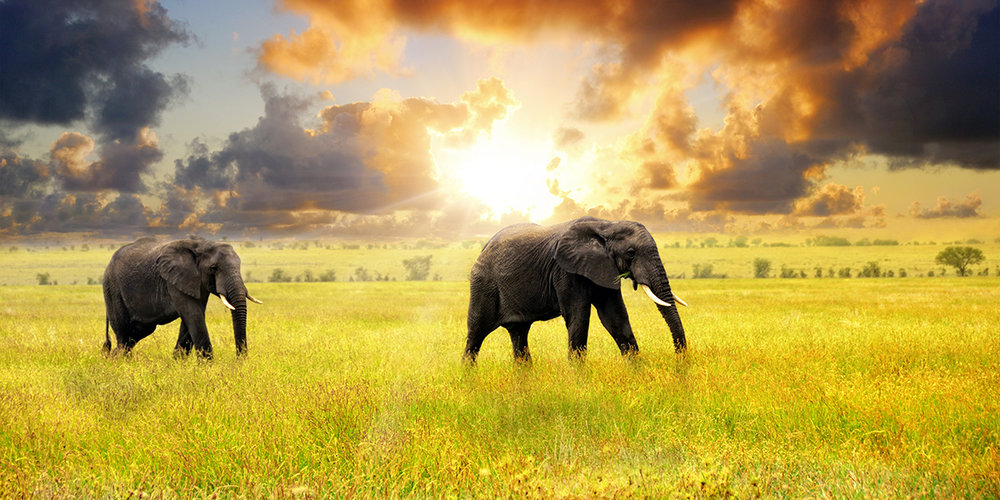 tanzania-elephants-sunset.jpg