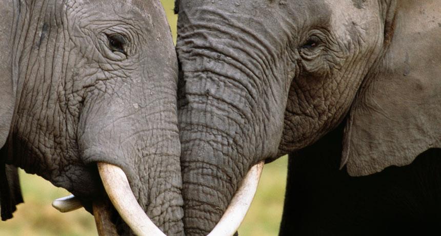 860-header-elephant-ivory-wasser4HR_0.jpg
