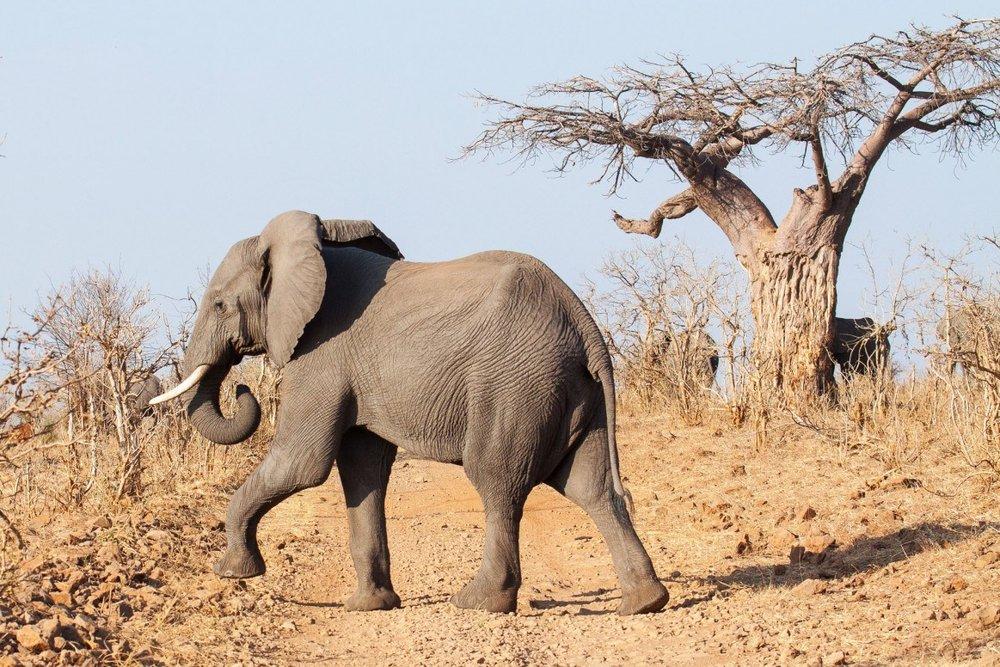 HIGHLIGHTS - *Chobe Game Reserve *Moremi Game Reserve *Okavango Delta *Makgadikgadi Game Reserve