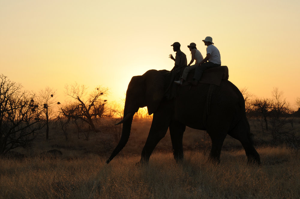 14 Day LUXURY SAFARI / **** - • Private Game Reserve • Cape Town • Victoria Falls • Chobe River experience14 DAYS / 13 NIGHTS