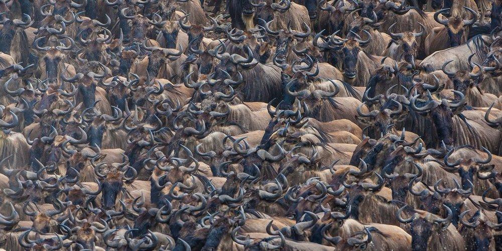 africa safari masai mara 22.jpg