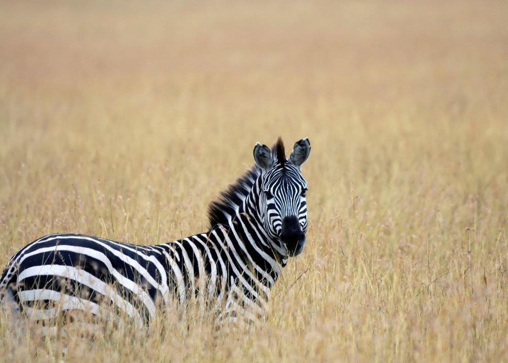 africa safari masai mara 20.jpg