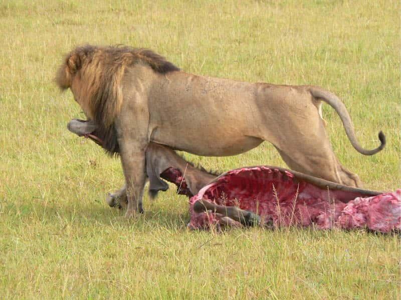 africa safari masai mara 13.jpg