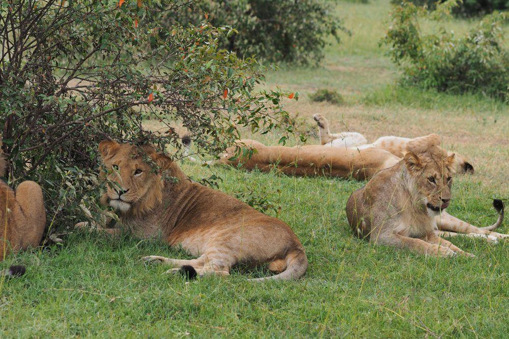africa safari masai mara 9.jpg