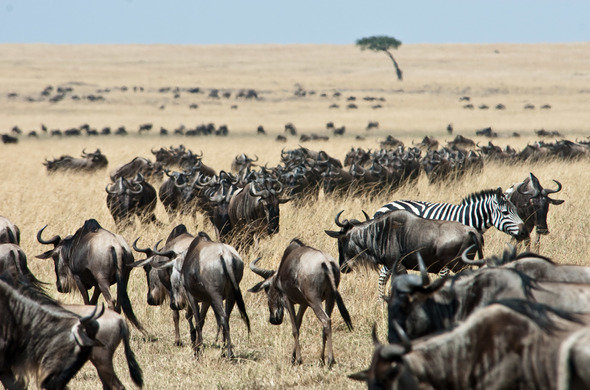 africa safari masai mara 8.jpg
